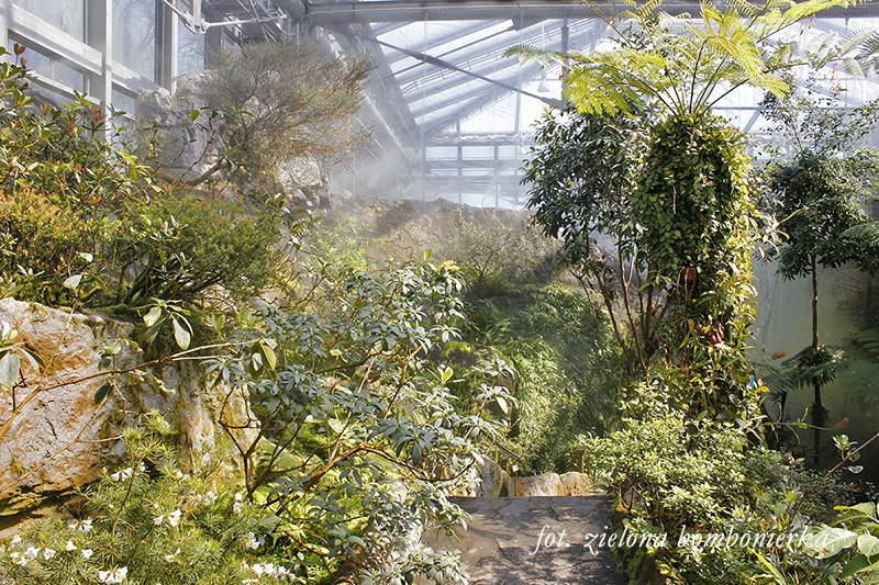 Botanika Bremen Borneo iNowa Gwinea