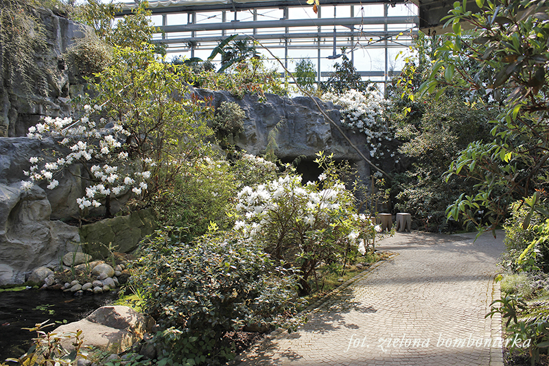 ogród wBremie