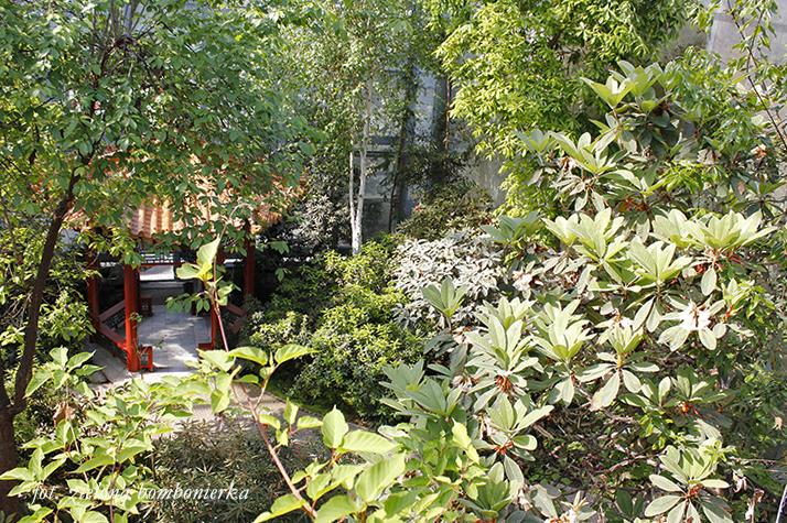 pawilon herbaciany