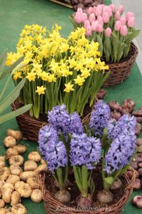 wiosna wkoszykach