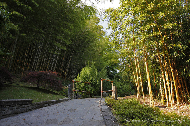Villa Carlotta – Ogród Botaniczny