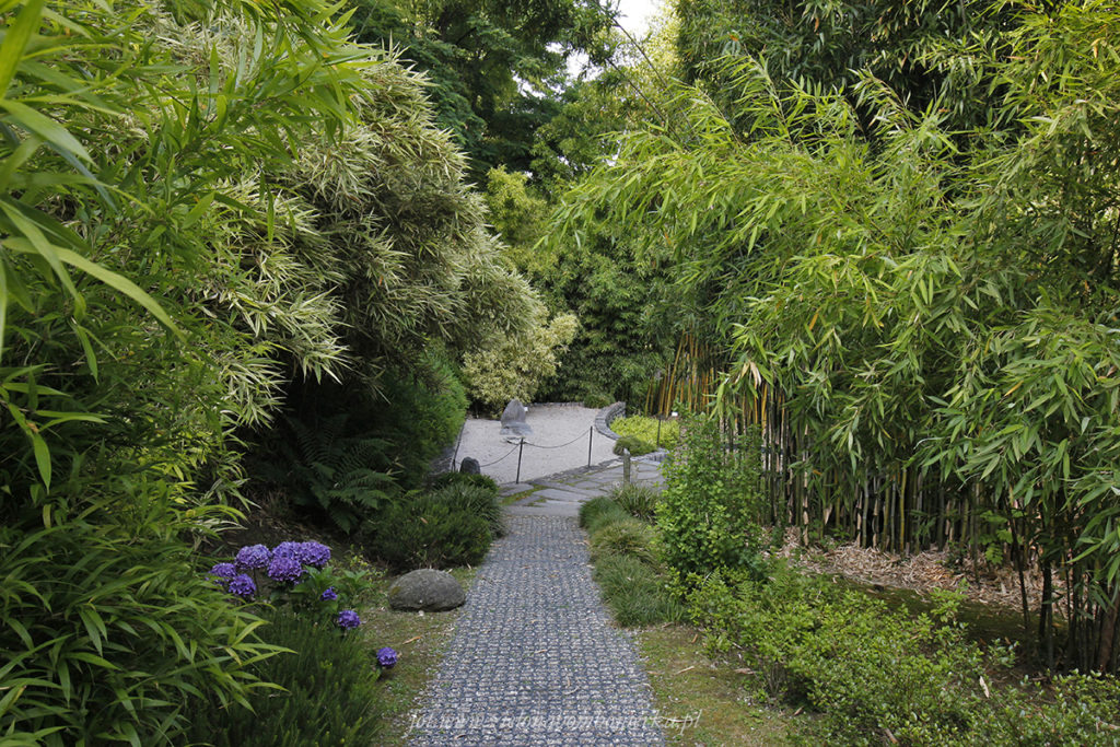 Villa Carlotta Ogród Bambusowy