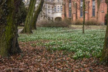Park wTu(nie)rwi(j) – śladami śnieżycy wiosennej