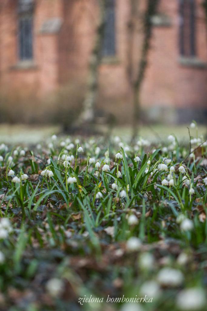 śnieżyca wiosenna Park wTurwi
