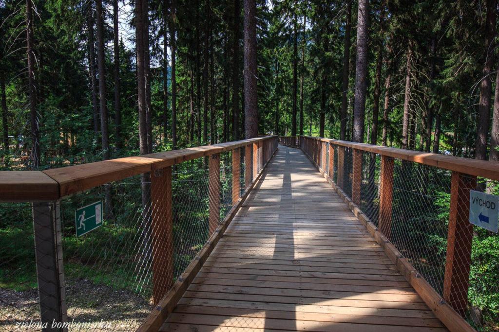 Ścieżka koronami drzew