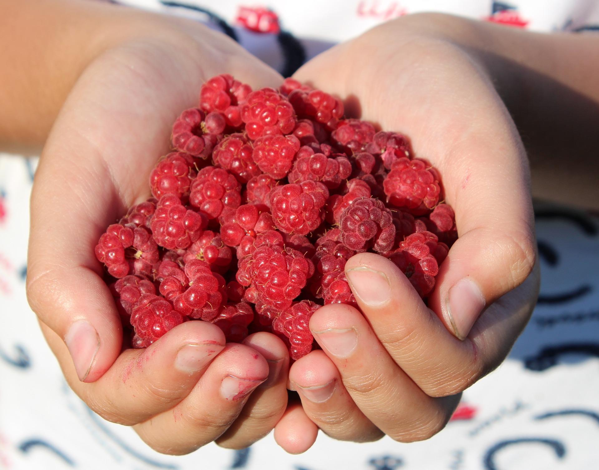 Owoce maliny