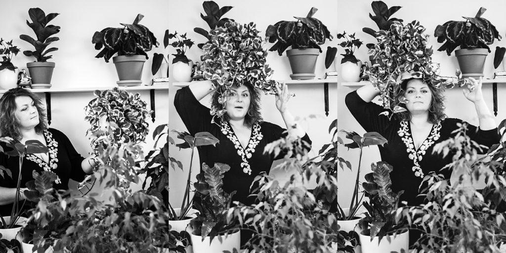 zielona bombonierka - rośliny pokojowe