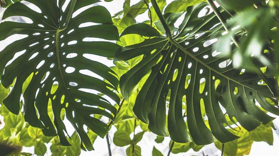Jak stworzyć urban jungle czyli miejską dżunglę?