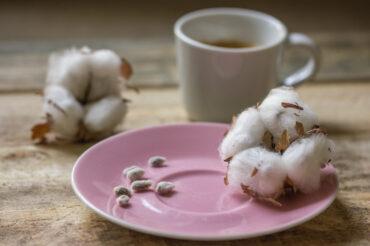Uprawa bawełny indyjskiej odnasionka