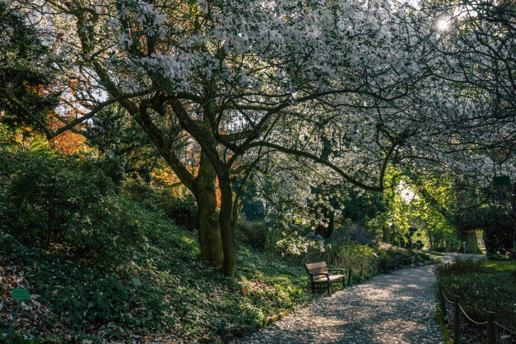 Arboretum wWojsławicach