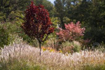 Fotografowanie ogrodów – idealne hobby dla ogrodników!