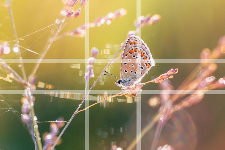 Fotografowanie Ogrodów Podstawowe Rodzaje Kompozycji Zielona