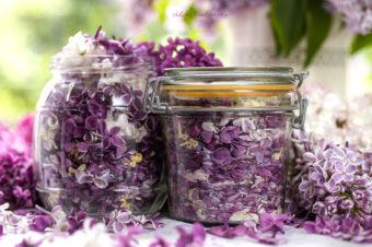 Majowa herbata zkwiatów lilaka
